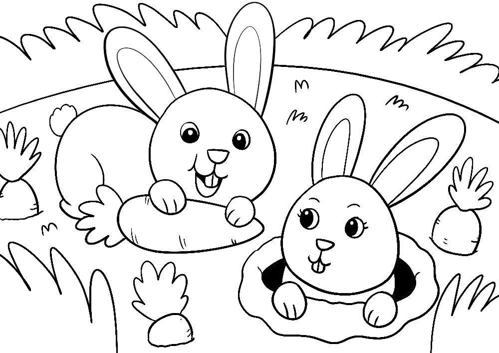 zwei Hasen auf einem Feld